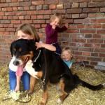 Hofhund Kinder reiten Reitstall