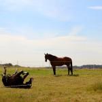 glückliche Pferde auf der Weide
