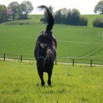 pferd auf weide