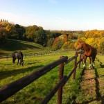 Pferde weide mettmann Umgebung