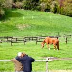 Pferde auf weide mettmann Düsseldorf