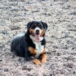 Hofhund Reitstall